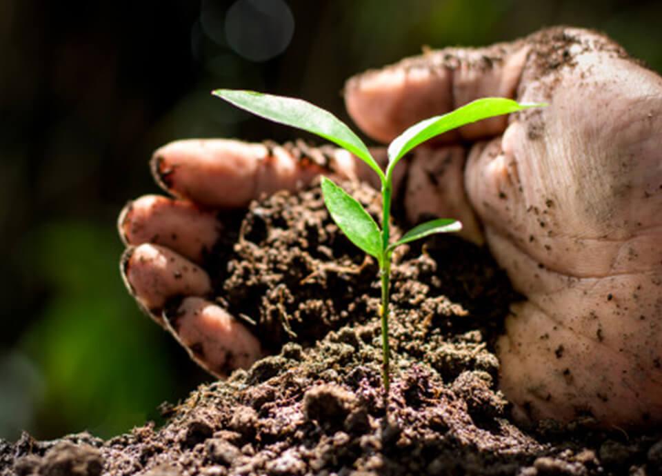 Способствуя более зеленому и здоровому миру, выращивая больше деревьев
